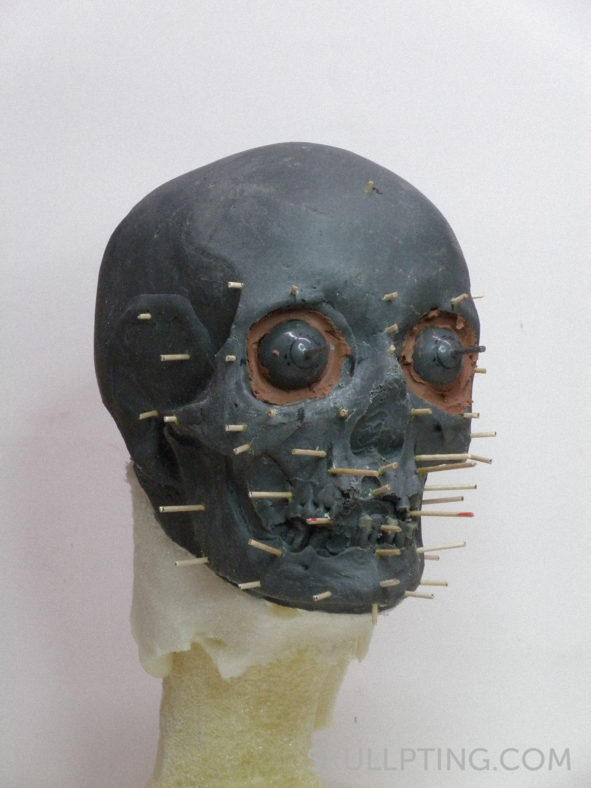 the replica of the skull with pegs to show the tissue thicknesses