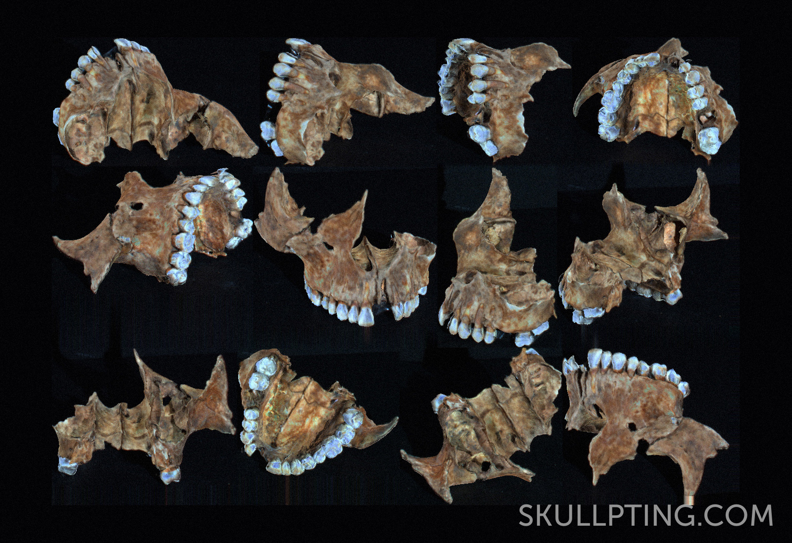 3D scan from the upper jaw. Made by M.H. Sepers, 4D - Research Lab.