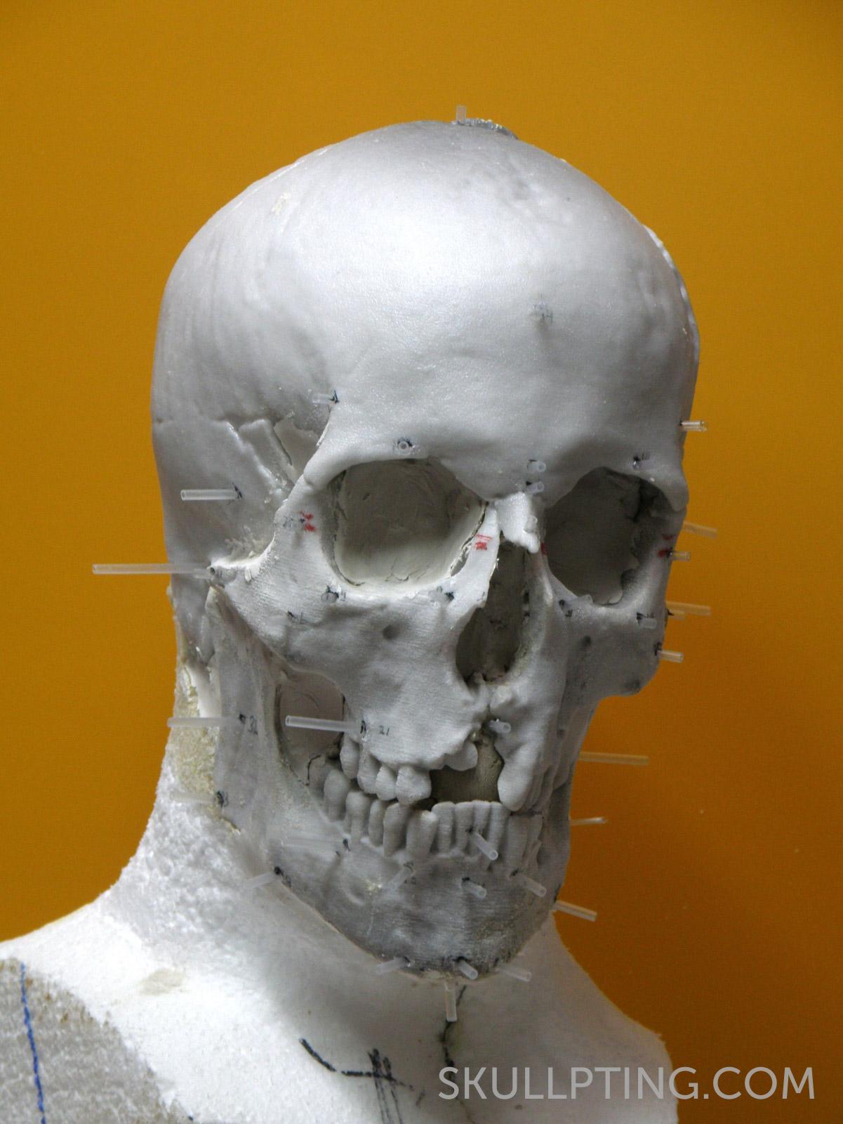 Kopie van de schedel